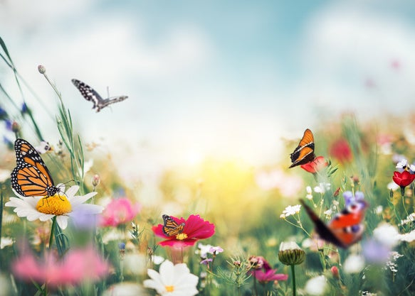 A field of wildflowers and butterflies