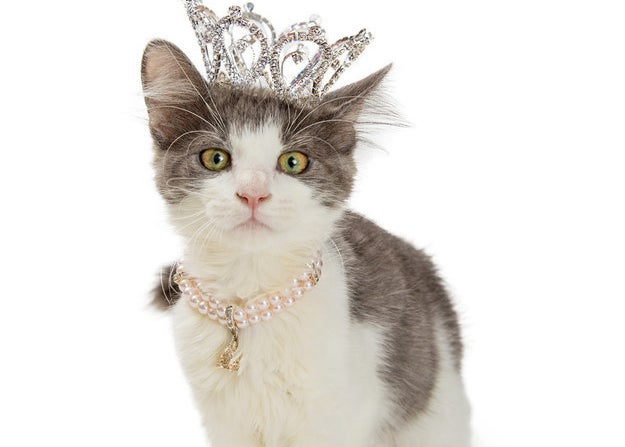 Cat in a tiara and necklace