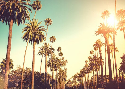 Rows of palm trees in the sunlight
